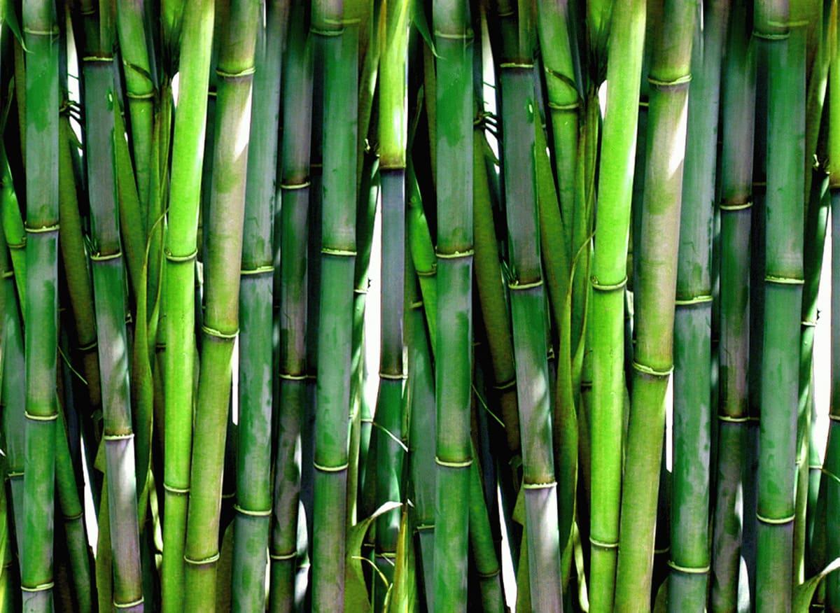Tipi-di-bambu